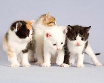4 gatti è il modo di dire per indicare un gruppo di poche persone